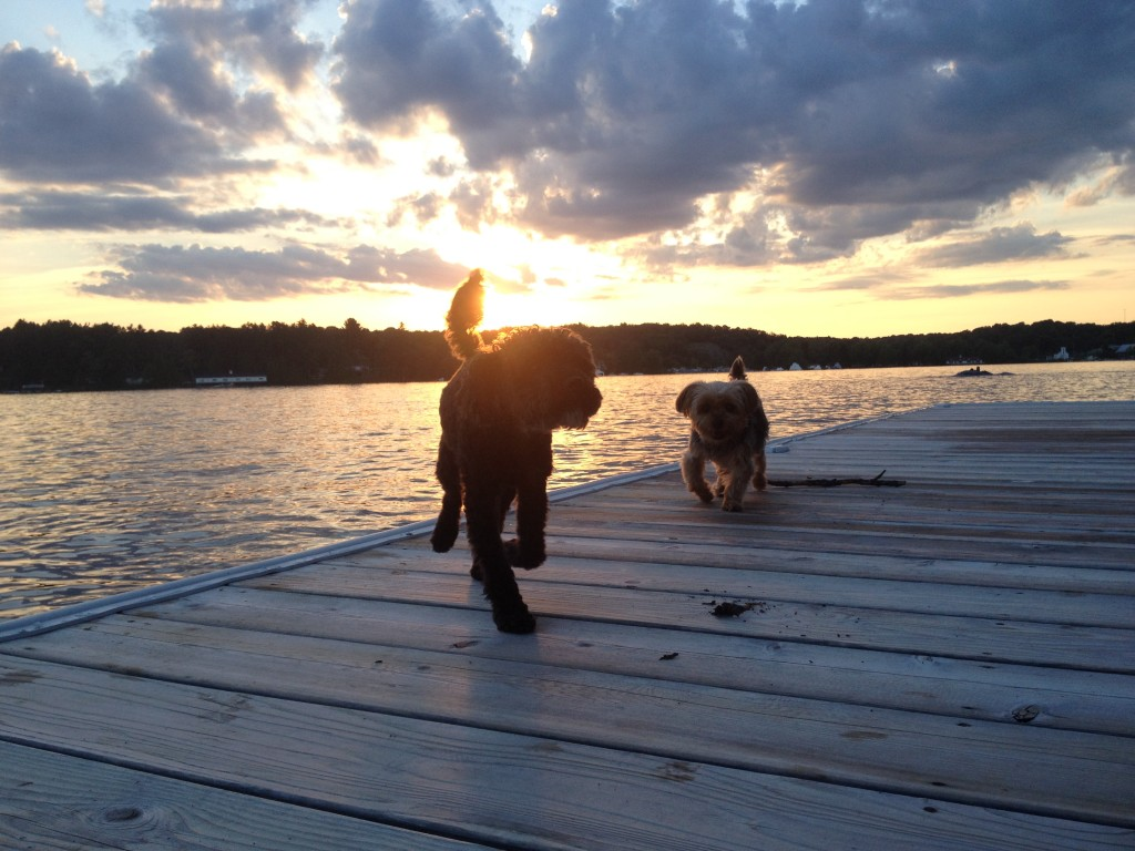 Dock life at Lake Rosseau